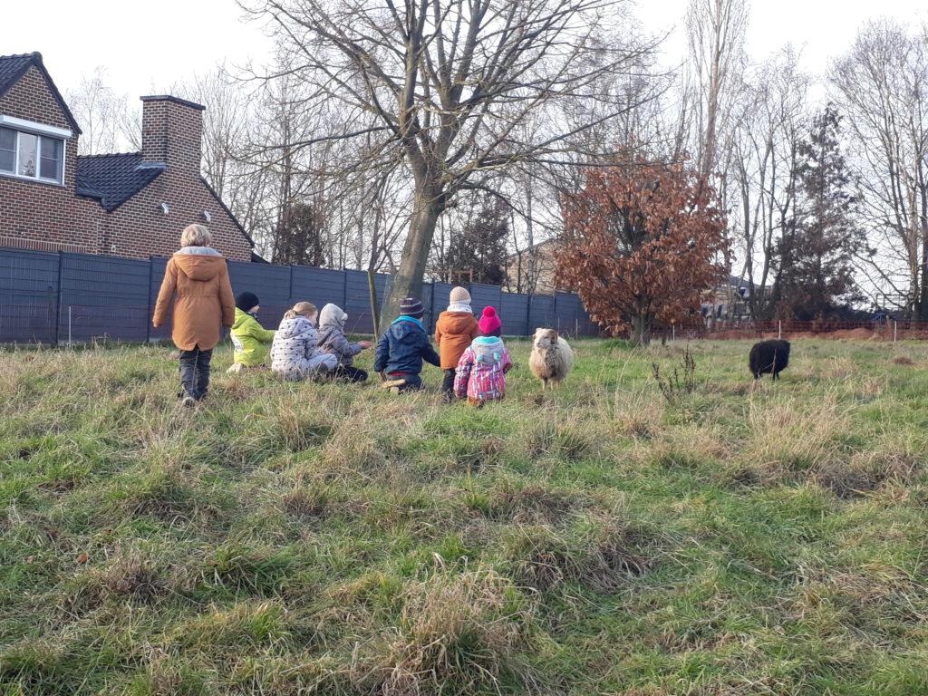 Enfants qui regardent les moutons, animation pédagogique