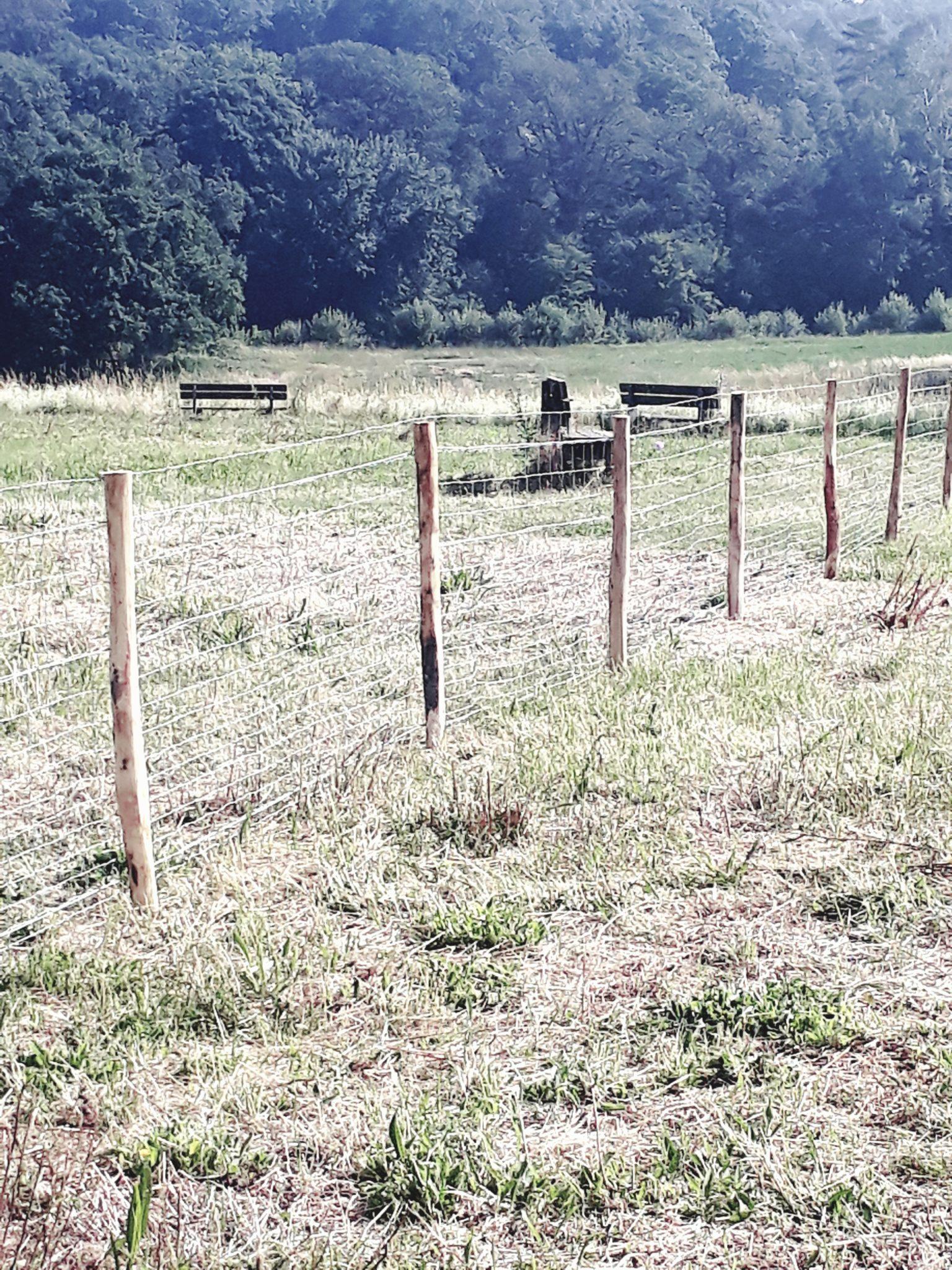 Zone où les moutons d'Ouessant pâturent, écopâturage à l'UCM