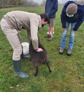 Vétérinaire Ruminivet Sheep Solution